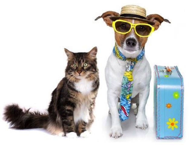 Tips for Traveling with a Cat or dog
